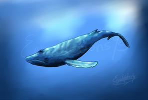 Whale by Eeveelutions95