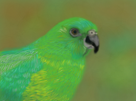 Green Red Rumped Parakeet by MacAodhagain