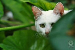 Little White cat by Jiesen