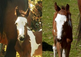 Foal head shots by BangGoesReality