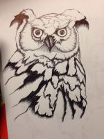Have another owl! TAKE IT!!! by Damiannnnnnn