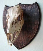 Engraved Deer Skull by TheMinx