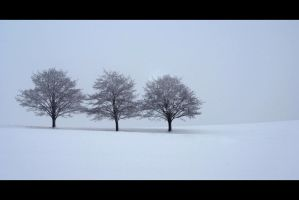 Three Trees ll by mARTinimal