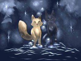 Leafpool and Crowfeather :: All of the Stars by SigneoftheMoon