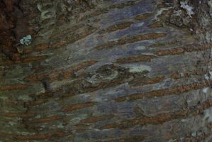 Textures - Bark by Monumnas-Stock