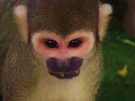 Squirrel Monkey by Raaarrrrw