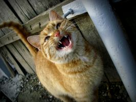 hungry cat II by AlexBlood