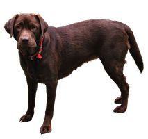 Dog PNG.. by Alz-Stock-and-Art