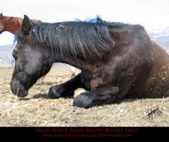 Unusual Angle 07 Jester by AstriexEquineStock