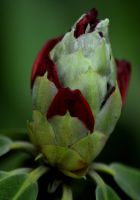Emerging Beauty by Clangston