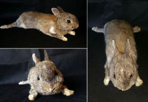 Poseable Rabbit Softmount SOLD by DeerfishTaxidermy