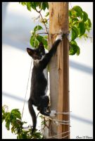 Hang on Kitty... by jevigar