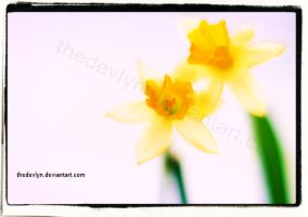 Some of those yellow flowers by TheDevlyn