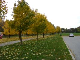 Canadian Fall Colours 41 by Aswang301