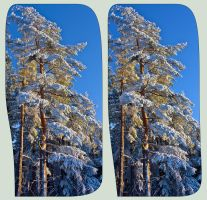 The Asperities Of The Winter 3D ::: HDR Cross-Eye by zour