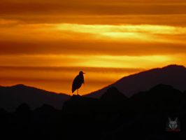 Heron Sitting Upon The Horizon by wolfwings1