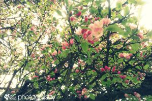 Spring Beauty by xe2x