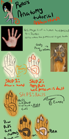 Rello's Basic Anatomy Tutorial: Anthro/Furry Hands by R3llO