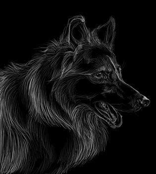 Collie scratchboard by nightspiritwing