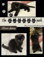 The kitten pack 01 by LunaNYXstock