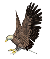 Eagle 02 PNG Stock by Roys-Art