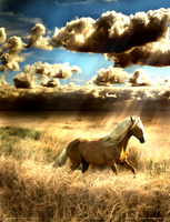 Fields of Gold by JarethsQueenAlora