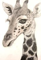 Giraffe Drawing by xXNami-sanXx