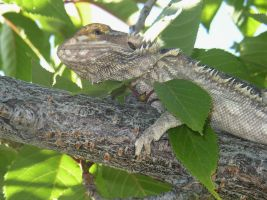 Sargon in a tree by Son-of-Italy