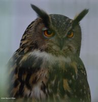 Portrait of an Eagle Owl by Mararda