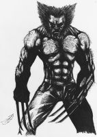 wolverine sketch by darkartistdomain