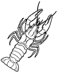 Color me! - Crayfish by MisterBug