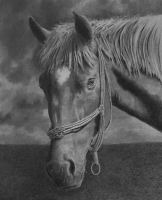 Horse portrait by graphitemyers