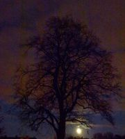 CAN YOU SPOT VENUS? Moonlight,Tree and Evening Sky by SrTw