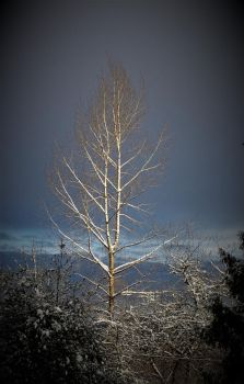 Frozen tree by lucium55