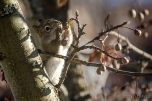 Squirrel searching for a seed by sdhanjal115