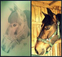 Alfie drawing by JACPhotography