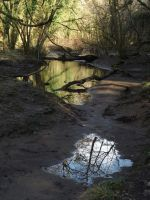 big puddle, small puddle by nonyeB