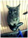 Cat on bicycle by koloversha
