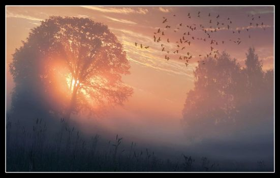 morning crows by AlloxaFirst
