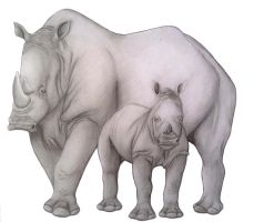 Rhino and Baby by HDevers