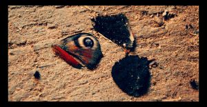 lost butterfly by cwiny