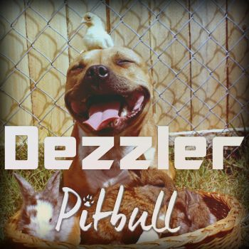 Dezzler - Pitbull by ReDes1gn