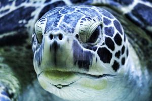turtle in the zoo by Lenina01