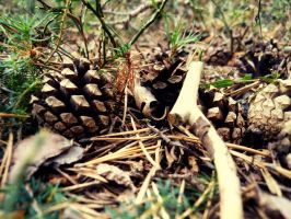 Pine Cones by Reira86