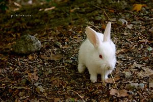 little bunny by pLateauce