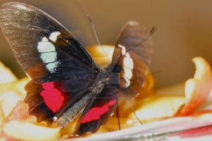 Thought of a butterfly by John-Furie-Zacharias