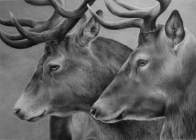 Red Stags by ACantrell