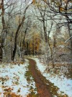 down the path through the woods on the first snow by mudyfrog