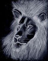 Lion by theGman0