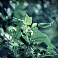 Ivy by Rustmouth